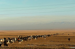 After Anthrax Outbreak in Kazakhstan, Kyrgyzstan Tightens Border Controls