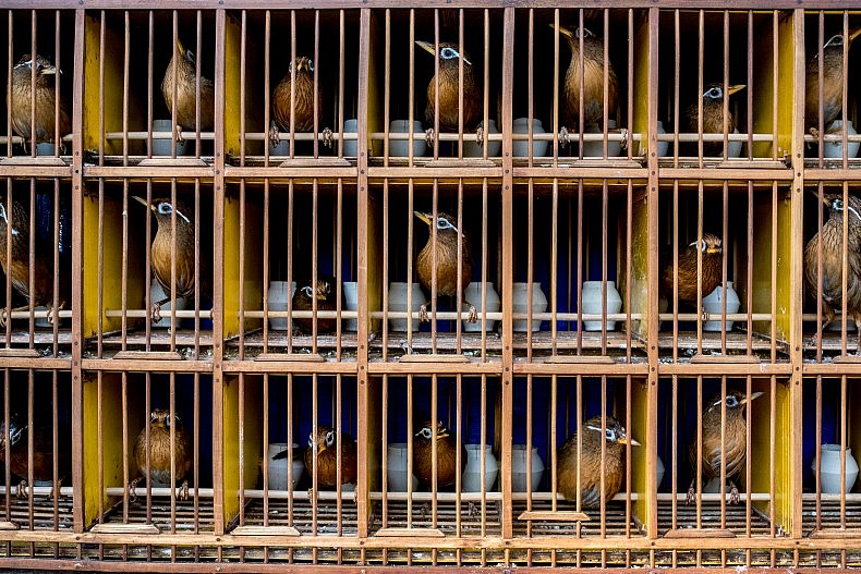 Caged songbirds in a public park in Xishuangbanna, China. Photo by Luc Forsyth.