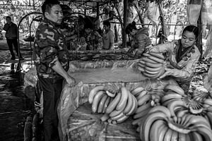 Bananas on the Lancang: Grown in Yunnan, Destined for Shanxi