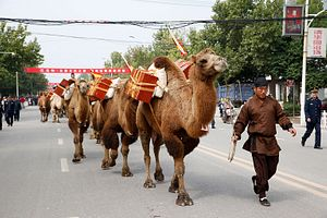 3 Years on, Where Does China's Silk Road Stand?