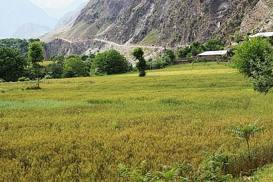 Pakistan: Afghanistan's Unreliable Breadbasket