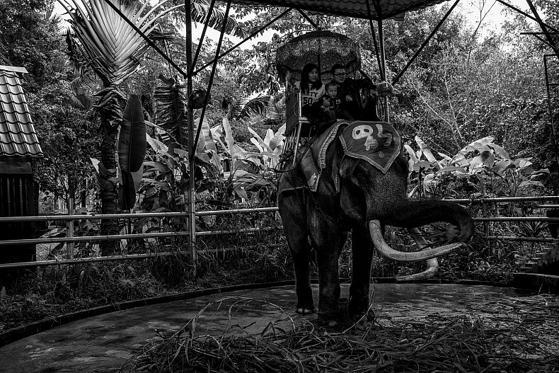 An elephant waits to be ridden by tourists at the Olive Dam Dai cultural village in Xishuangbanna, China. Photo by Gareth Bright.
