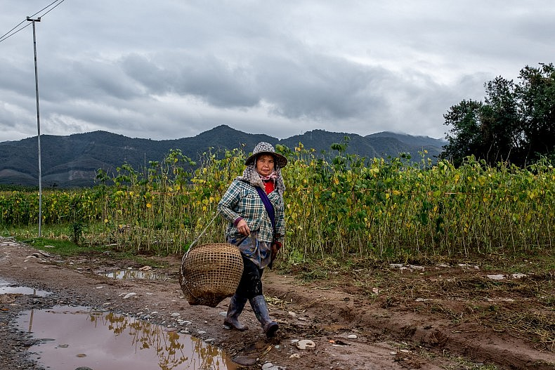 A woman walks past the farmland of Manhenuan village. Photo by Luc Forsyth.