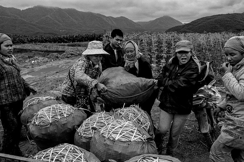Farmers pack freshly picked beans and peas into sacks for transport to local markets in Manhenuan village. Photo by Gareth Bright.