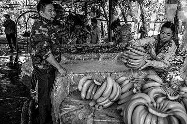 Bananas on the Lancang: Grown in Yunnan, Destined for Shanxi