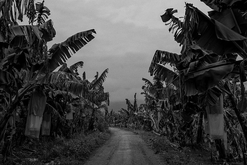 Banana plantation Mengkwang village, Yunan, China. Photo by Gareth Bright.