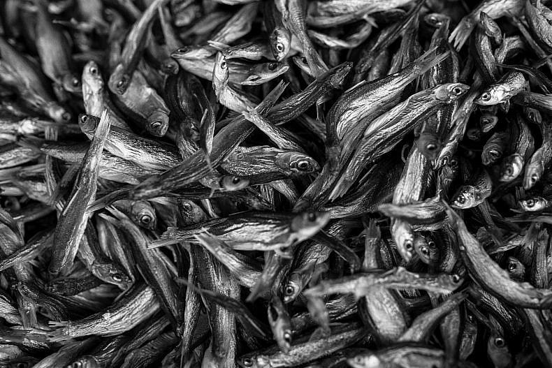 Fish hang to dry at a local market near the Lancang (Mekong) river in Jinglin, Yunnan, China. Photo by Gareth Bright.