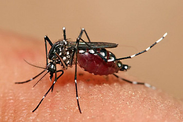 New Dengue Vaccine Potential Game Changer for Asia