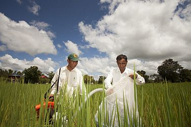 Cambodia Turns to China Amid Rice Woes