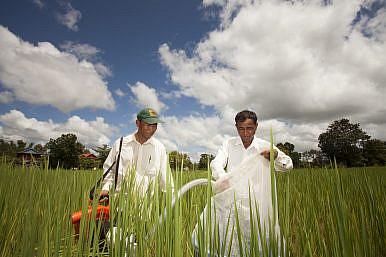 Shifting Idylls: Urban-Rural Dynamics in Cambodia