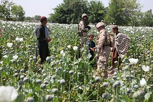 How Opium Fuels the Taliban's War Machine in Afghanistan
