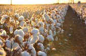 Uzbekistan Seeks Lifting of Cotton Boycott