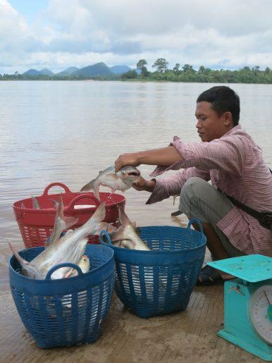 Killing the Mekong, Dam by Dam