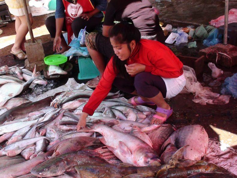 Ms Lar Pakse Fish mARKET