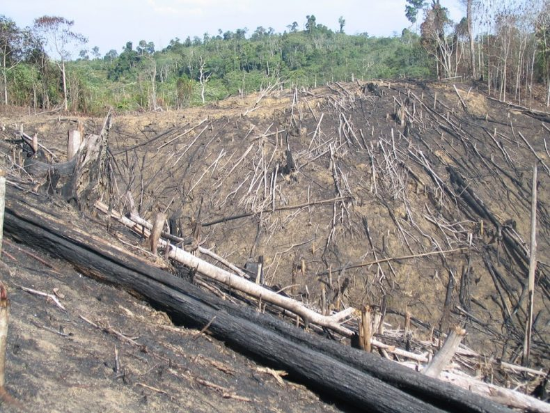 A forest in Borneo, devastated either for logging or to make room for a palm oil plantation. Photo by Jessica Lawrence, the previous director of the Borneo Project,