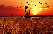 Modernizing Nature: China's Yellow River Delta Reserve