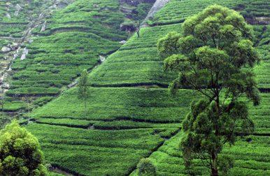 When Travel Writing Becomes Propaganda: Sri Lanka Edition