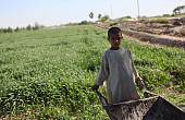 Farmers Without Markets: Afghanistan's Struggle Toward an Agricultural Economy
