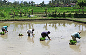Making Indonesia an Agrarian Nation Again