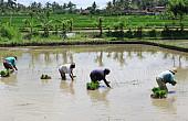 Making Indonesia an Agrarian Nation Again