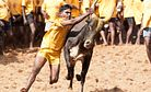 How Jallikattu Came to Be Linked With the Idea of 'Being Tamil' in India