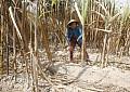 Vietnam's Next Environmental Hotspot