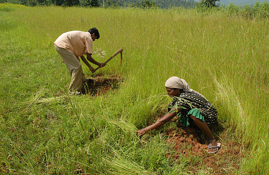 essay on plight of indian farmers 8 facts about india's farmers that will make you go 'jai kisaan  our farmers work countless hours to ensure  , indian farmers, farming in india.