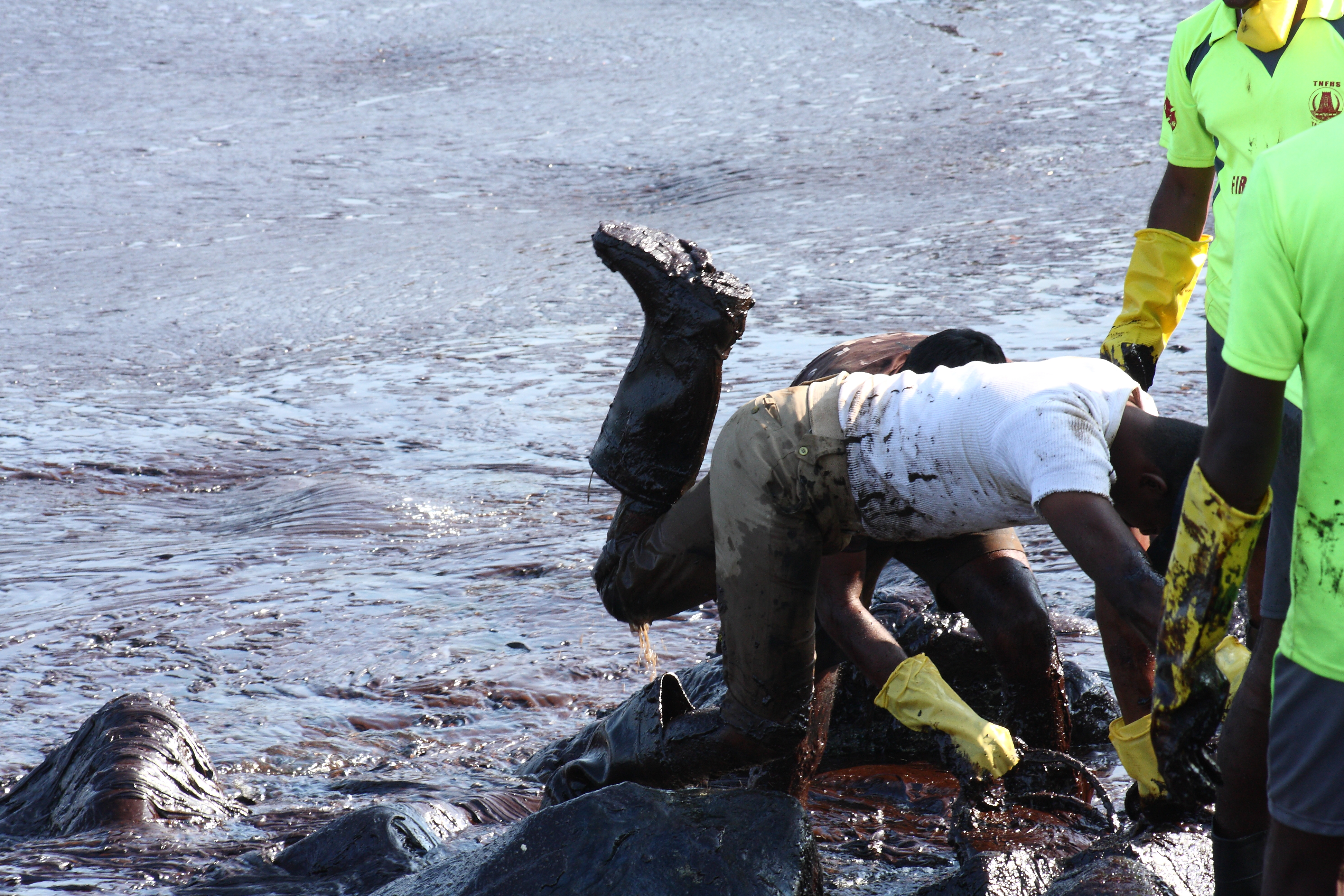 The Great Chennai Oil Spill Clean Up