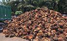 Malaysia's Path Toward Sustainable Palm Oil