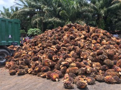Malaysia's Path Toward Sustainable Palm Oil
