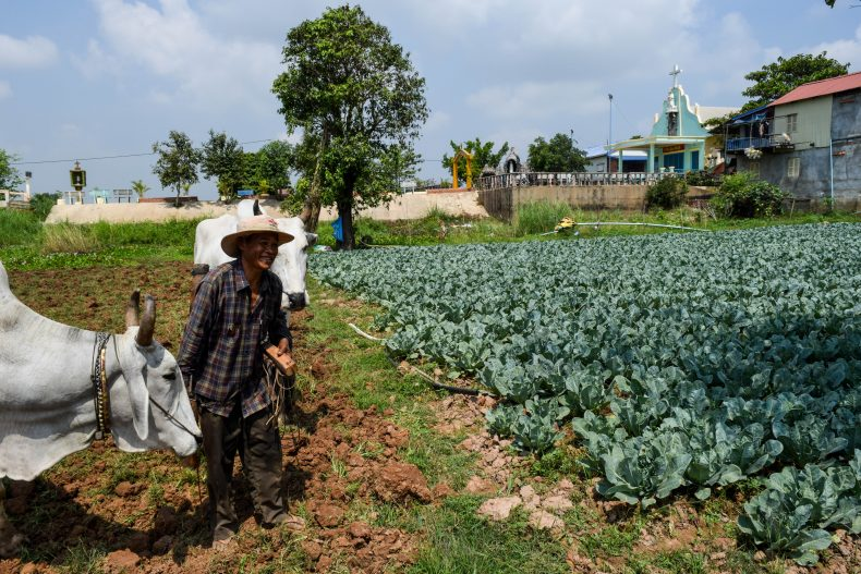 Farmer Mao Long has lived nearby his whole life, and often eats and drinks with friends in the Vietnamese community. Image by Peter Ford.