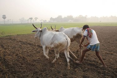 Indian Farmers Protest, Seeking Drought Relief