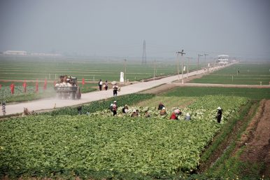 What North Korea's Markets Could Tell Us About Its Food Security