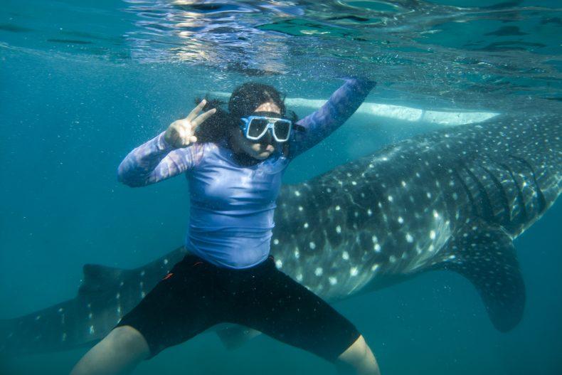 whale shark tourism the diplomat