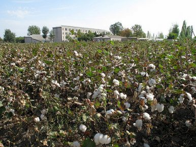 Forced Labor Continues in World Bank Project Areas in Uzbekistan