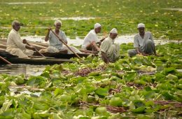 The Slow Death of Kashmir's Dal Lake