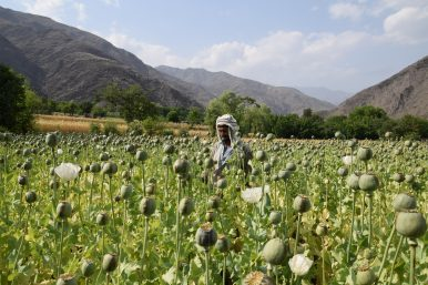 Afghanistan's Opium Trade: A Free Market of Racketeers