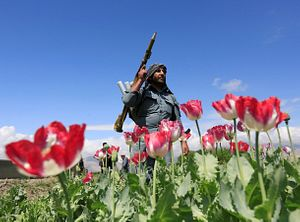 War, Drugs, and Peace: Afghanistan and Myanmar