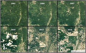 The Difficult Discussion on Cambodia's Forests
