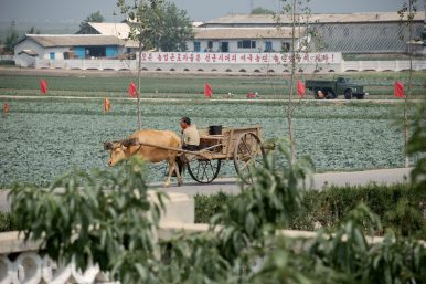 Sanctions and North Korea's Precarious Food Security