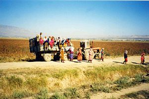 The Feminized Farm: Labor Migration and Women's Roles in Tajikistan's Rural Communities