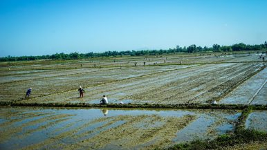 Mitigating the Effects of Climate Change in Vietnam