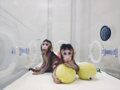 In Global First, China Clones 2 Monkeys Using 'Dolly' Method