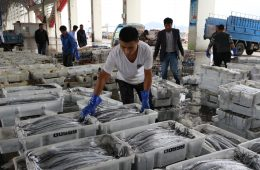Xiangshan's Struggling Fishing Industry