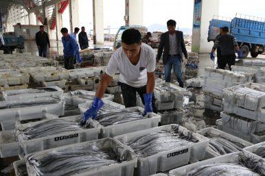 Xiangshan's Struggling Fishing Industry