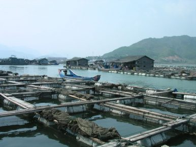 Can Aquaculture Solve the Fishing Problems in the South China Sea?