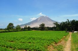 Living in the Shadow of Mount Sinabung