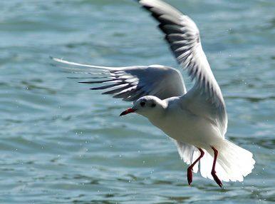 Copied Free Birds: Plagiarism Allegations Hit Kazakhstan's Government Again