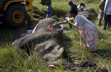 Assam's Elephant Emergency