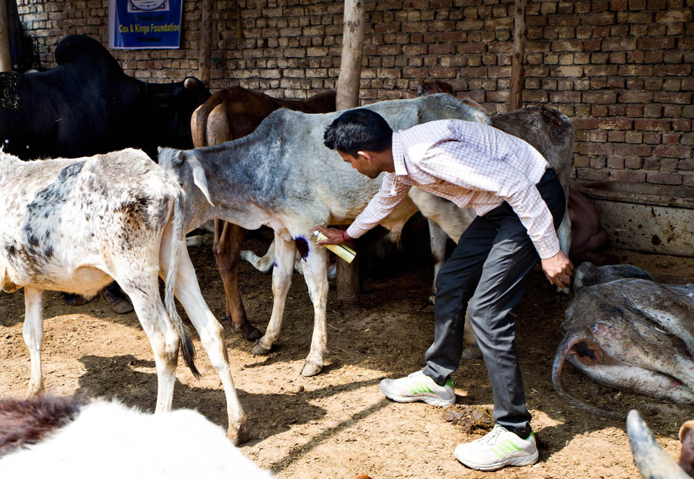 One Indian Man's Animal Rescue Mission